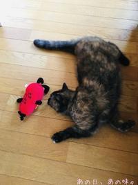猫と、味ごはんと叩きレンコンごま酢和え。 - あの日、あの味。