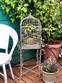 梅雨の長雨と夏の暑さで枯れてしまったお花達♡ - 薪割りマコのバラの庭