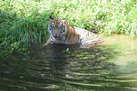 ラウトの水浴アプローチ - 動物園へ行こう