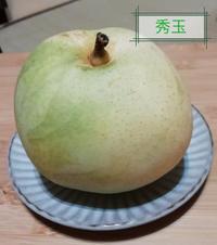 梨の家系図 - ないものを あるもので
