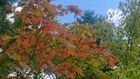 秋を楽しむノルディックウォーキング! - 秀岳荘みんなのブログ!!