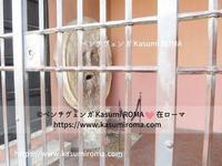週末のクイズ㉚「 真実の口から♪」&ローマのKasumi♪のローマ星空さんぽ☆彡⑧ ~ Bocca della Verità ~ - 『ROMA』ローマ在住 ベンチヴェンガKasumiROMAの「ふぉとぶろぐ♪ 」