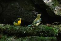 水場の鳥最終回 - そらと林と鳥