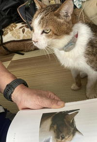 コロナ禍のライフログ #4 - COMPLEX CAT