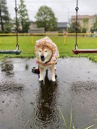 秋雨 - 写心食堂