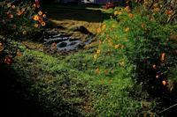 晩夏・里山の風景 - シンプル・ハウスワイフのRANDOM SHOT