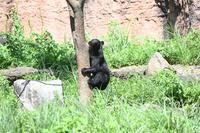 クマゼミ - 動物園へ行こう