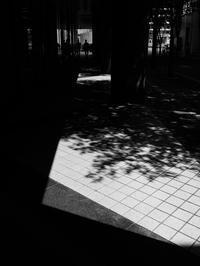 夏の終り - 節操のない写真館
