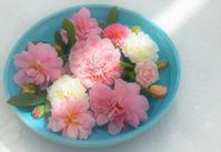 夏剪定 - バラとハーブのある暮らし Salon de Roses