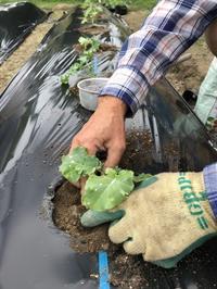ケールを植え胡瓜に網を張る - 島暮らしのケセラセラ