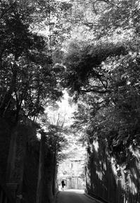 夏の午後 - TACOSの野鳥日記