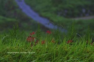 糸島の景~いとしまのしらべ~⑳ - 糸島の景~いとしまのしらべ~