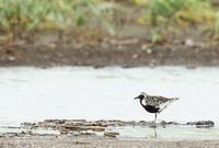 ダイゼン - 北の野鳥たち