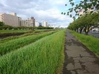 朝のy散歩~水戸駅周辺 - 新 LANILANIな日々