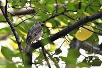 成長したヒナたち - 鳥と共に日々是好日②