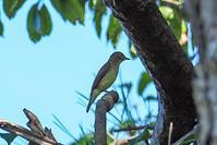 大阪城公園で探鳥(2020.9.12) - 週末バーダーのBirding記録