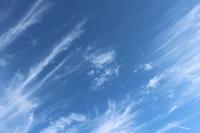 ちいさい秋の実り#1 - 木洩れ日 青葉 photo散歩