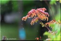 秋雨の朝 - 北海道photo一撮り旅