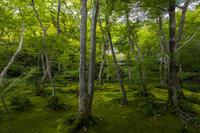 祇王寺の青もみじ - 花景色-K.W.C. PhotoBlog