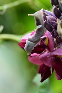 癒し系の幼虫3種 - *la nature*