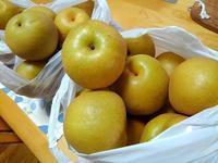 今年も梨を送ってみたものの… - 井ノ中カワズの井戸端ばなし