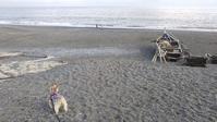 ■久しぶりの海岸散歩■ - HANALOG ~ヨーキーとの暮らし~