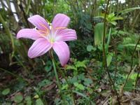 ニョキニョキと - だんご虫の花