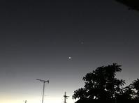 月と金星 - マリカの野草画帖