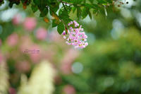 まゝに/9月の散策武蔵丘陵森林公園 2 - Maruの/ まゝに