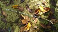 水晶とかを掘り出すときに使うあのアイテムのこと - 或岩松枝諏の一服