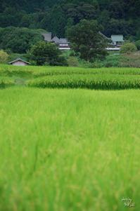 明日香村橘寺を見る - ぶらり記録 2:奈良・大阪・・・