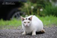 カメラ目線くれる猫たち!(^^)! - 自然のキャンバス