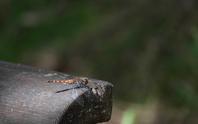 フィールドnの記録 2020/9/15 - 昆虫(動植物)撮影記録