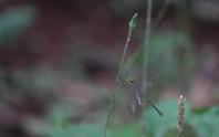 フィールドn3の記録 2020/9/15 - 昆虫(動植物)撮影記録