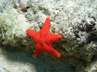 #538ヒメチシオヒトデ - ランゲルハンス島の海