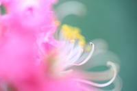花の移り変わり - 写真の記憶