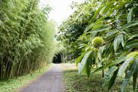 【若竹の杜若山農場】 - うろ子とカメラ。Ⅱ