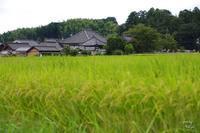 明日香村飛鳥 - ぶらり記録 2:奈良・大阪・・・