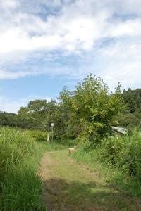 秋の虫 - 千葉県いすみ環境と文化のさとセンター