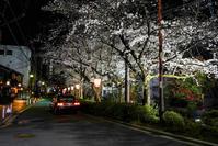 京都夜スナップ(17) - LUZ e SOMBRA
