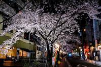 京都夜スナップ(19) - LUZ e SOMBRA