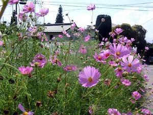秋のお花見 -