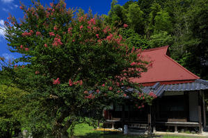 満寿寺のサルスベリとキバナコスモス - 花景色-K.W.C. PhotoBlog