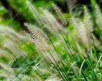 竹沼でブラ小父さま9月中旬編 - 星の小父さまフォトつづり