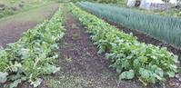 セラピア農園活動実績 - NPO法人セラピア函館代表ブログ アンシャンテルール就労継続支援B型事業所中止 セラピアファ-ムは農福連携へ