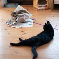 お昼寝クーちゃん - 猫と夕焼け