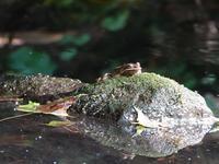 カエル - 小さなお庭のある家3