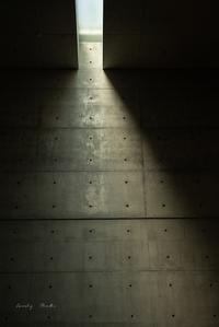 光の道♪ - Lovely Poodle