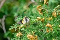鳥たち - ジャコの「毎日 好きな事♪やってます」