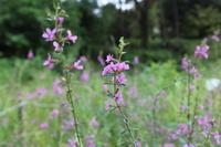 秋の花たち - 野山の花たち